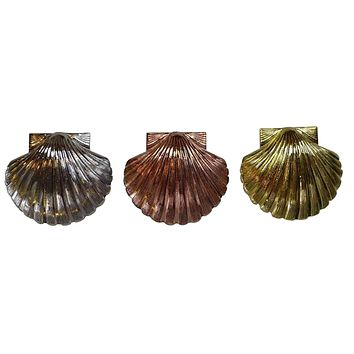 St. Thomas of Acon Shells - Different Sizes and Colors