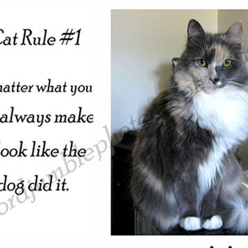 Catty Cards Greeting Cards. Karma the Calico Cat Blank Note Card. Funny Card for Pet Lover. Thinking of You Card for Cat Lover. Cat Gift