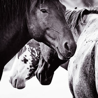 Wild Horses Fine Art Photography Print 11x14 by BethWold on Etsy