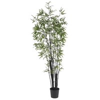 6' Black Bamboo Silk Tree (2 Thick Trunks)