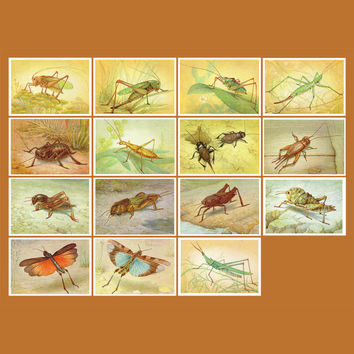 Grasshoppers. Crickets. Locusts Insects (Artist L. Aristov) - Set of 15 Vintage Postcards - Printed in the USSR, «Fine Arts», Moscow, 1990
