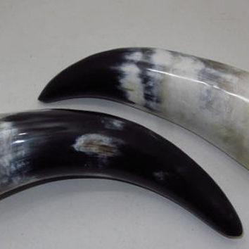 2 Cow horns...E2B6d......Polished natural colored cow horns.....ox horns