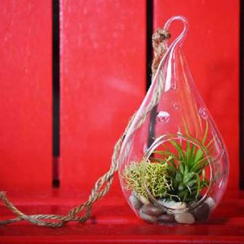 Air Plant - Tear Drop Terrarium Kit with Moss and Pebbles