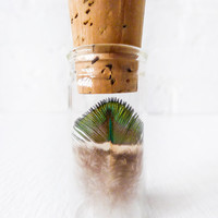 Real Peacock Feather Specimen In Glass Vial Cork Top - Science Display - Wings of Flight - Nature Lovers - Mad Scientist Laboratory