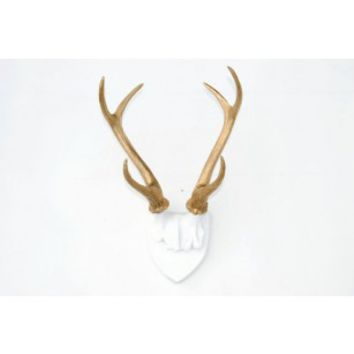 Large Faux Taxidermy Deer Antler Mount - White Plaque With Rich Gold Antlers - Unique Fake Resin Decor - Animal Friendly Wall Art
