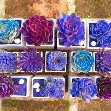 Rare Beauty Succulent Seeds Easy To Grow Potted Flower seeds 200pcs bonsai Seeds for Home & Garden mix color