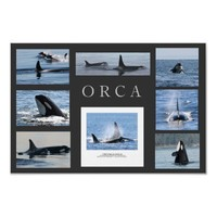 Orca Whale Collage Poster Killer Whales from Zazzle.com