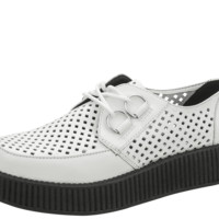 White Perforated Creeper