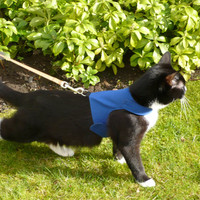 Custom Made To Order- Cat Walking Jacket / Harness by Land O' Burns Bengals