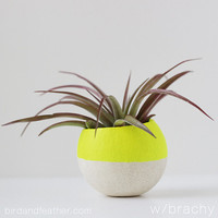 Neon Yellow Air Plant Pot with AIr Plant