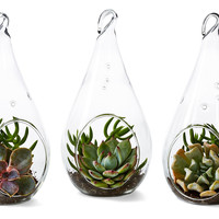 "8"" Succulent Terrarium Trio Kit, Live, Arrangements"