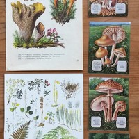 WOODLAND PAPERS by Wild Wood Gatherer