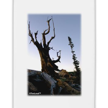 "Colorado Mountain Scenery Fridge Magnet 2""x3 by TooLoud"