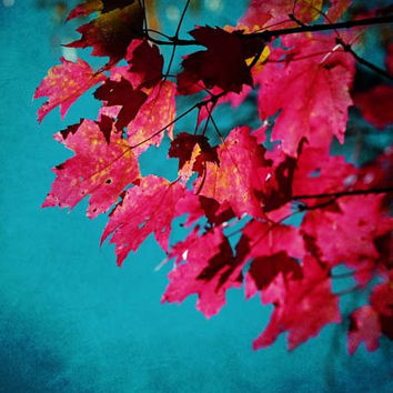 Cherry Red Maple Leaves on Teal Blue Sky - Fall Colors - Fine Art Photo