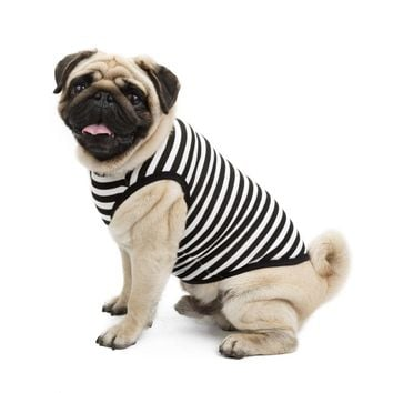 Summer T Shirt for Small Dogs