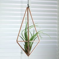 Geometric Hanging Copper Terrarium And Air Plant