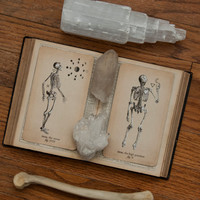 PRE-ORDER Antique Anatomy Tarot Deck, Major Arcana Deck, Tarot