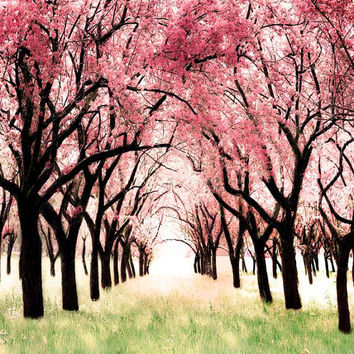 Spring, Nature Photograph, Pink, Cherry Blossoms, Woodland nursery, Wall Decor, 5x7 or 5x5 Fine art print
