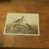 Vintage Quail Prints Set of 2/ Small Prints/Laminated Prints/Birds/Nature