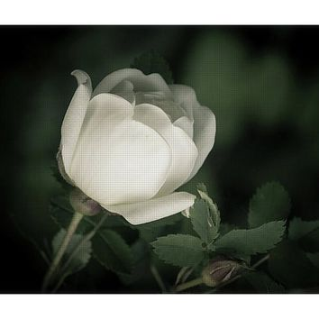 White Flower Of A Dogrose Yoga Mat