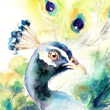 Peacock Bird Watercolor Painting Art Print, Watercolour Bird, Wall Art, Bird Illustration, Bird Art, Blue