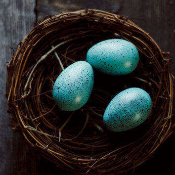 Birds nest photo, rustic wall decor, kitchen art, eggs, still life, nature print, cottage decor, brown, blue,fine art photo,country kitchen