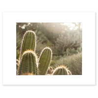 8x10 Matted Print, Green Cactus Picture Botanical Wall Art, 'Desert Sunset'