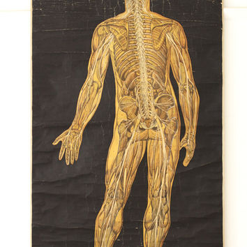 Antique Anatomy School Chart of the Human Body - Original Vintage Poster