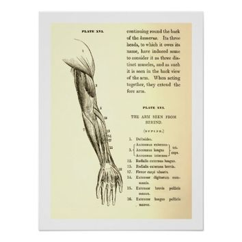 Vintage Anatomy | Muscles of the Arm (circa 1852) Poster