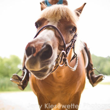 Funny Horse Photo Brown Pony Picture Equestrian Art Western Fine Art Photography Equine Photo Pony and Rider Brown GreenHome Decor Wall Art
