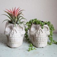 Skull Planter   Halloween Garden Decor