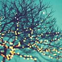 twinkle lights Art Print by Sylvia Cook Photography