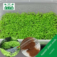 1000pcs Aquarium Grass Seeds Family Water Plant Easy to Grow aquarium plants Seeds aquatic fish