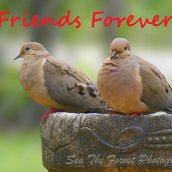 Bird Photography Note Card - Friends Forever, Nature Art, Greeting Card, Thinking of you,Thank you, 2 Cards/2envelopes, Birds of a Feather