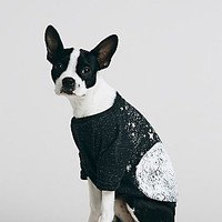 Free People Pet Project Womens Moon and Star Print Doggie Tee