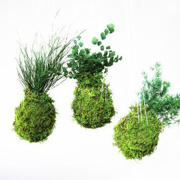Set of 3 Hanging Kokedama String Garden. Care Free, Real Preserved Plants. Moss Ball