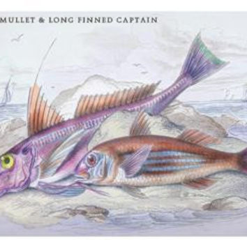 Red Surmullet and LOF Finned Captain 24x36 Giclee