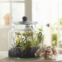 Birch Lane Faux Mixed Mini Orchid Terrarium