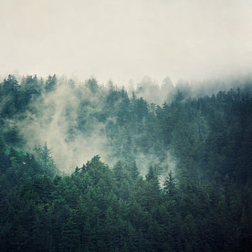 Evergreen Trees in Fog, Landscape, Nature Photography, Oregon  - Savage Beauty