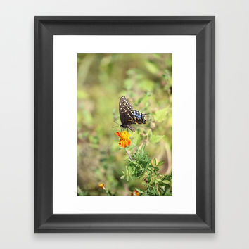 Black Swallowtail Butterfly Framed Art Print by Theresa Campbell D'August Art