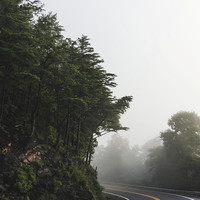 Roadway in Georgia #fog #nature #scene by Andrea Anderegg Photography
