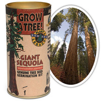 Grow Your Own Giant Sequoia