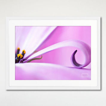 Violet Flower Petal Print, Picture Framed, Floral Decoration, White Wood Frame, Purple Daisy Wall Art