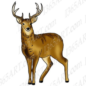 Brown Deer Animal Clipart Illustration, Includes Line art & coloring page, Digital Stamp, JPEG PNG 8x8 Print instant Dowload