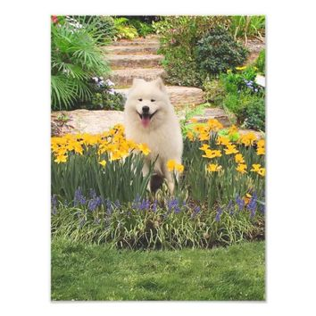 "Samoyed in Floral Setting, 14 X 11"" PROF.Media Photo Print"