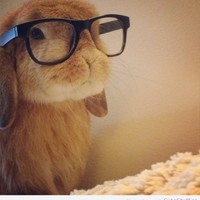 Instagrams cutest bunnies! - inspiring picture on Favim.com