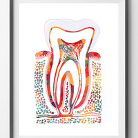 Molar Tooth watercolor print molar poster section with enamel dentin, pulp, root, gums, human anatomy art medical dental illustration, molar