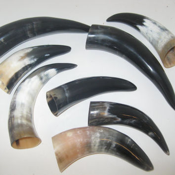 8 Cow horns...E8A60....Natural colored, polished cow horns...........ox horns