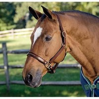 Circuit Padded Leather Halter | Dover Saddlery