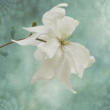Magnolia Photograph Turquoise White, Shabby Chic Wall Decor, Pastel  Floral Art Print